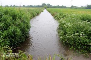Przepełniony wodą  rów między Rozmierką i Jędryniami