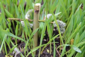 Krzyżyk z poświęconych gałązek palmowych na polu